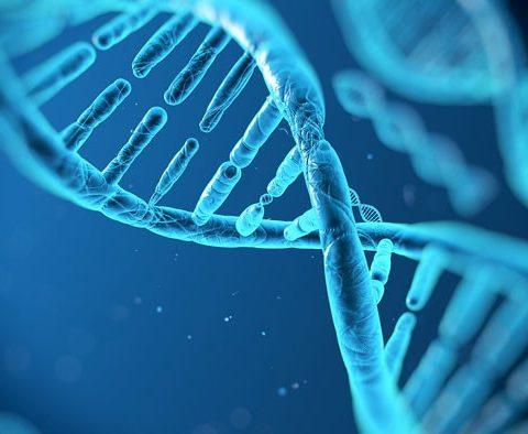 Генетический паспорт человека